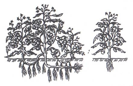 растения и по высоте,